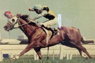1992 Clan O'sullivan