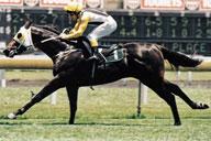 1995 Zephyrz